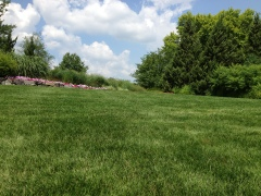 "Establish some ""lawn"" and order in August"